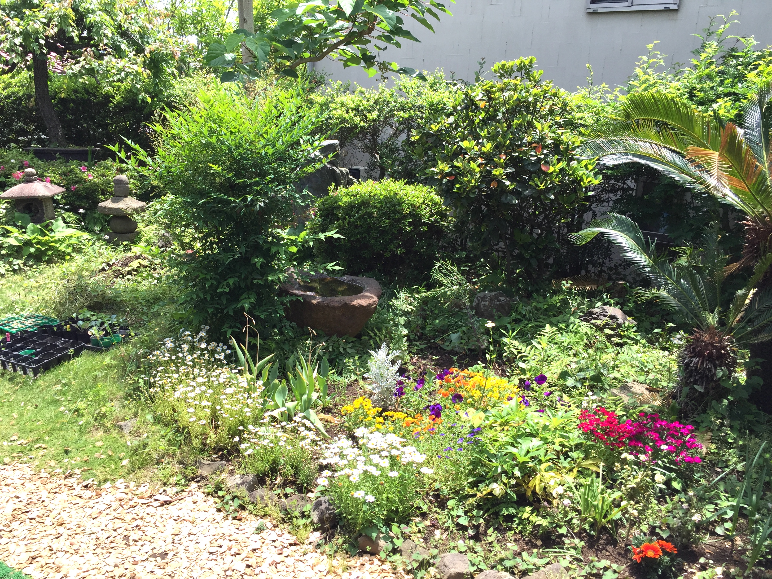 就労移行支援事業所 働くしあわせ JINEN-DO付近の花と緑