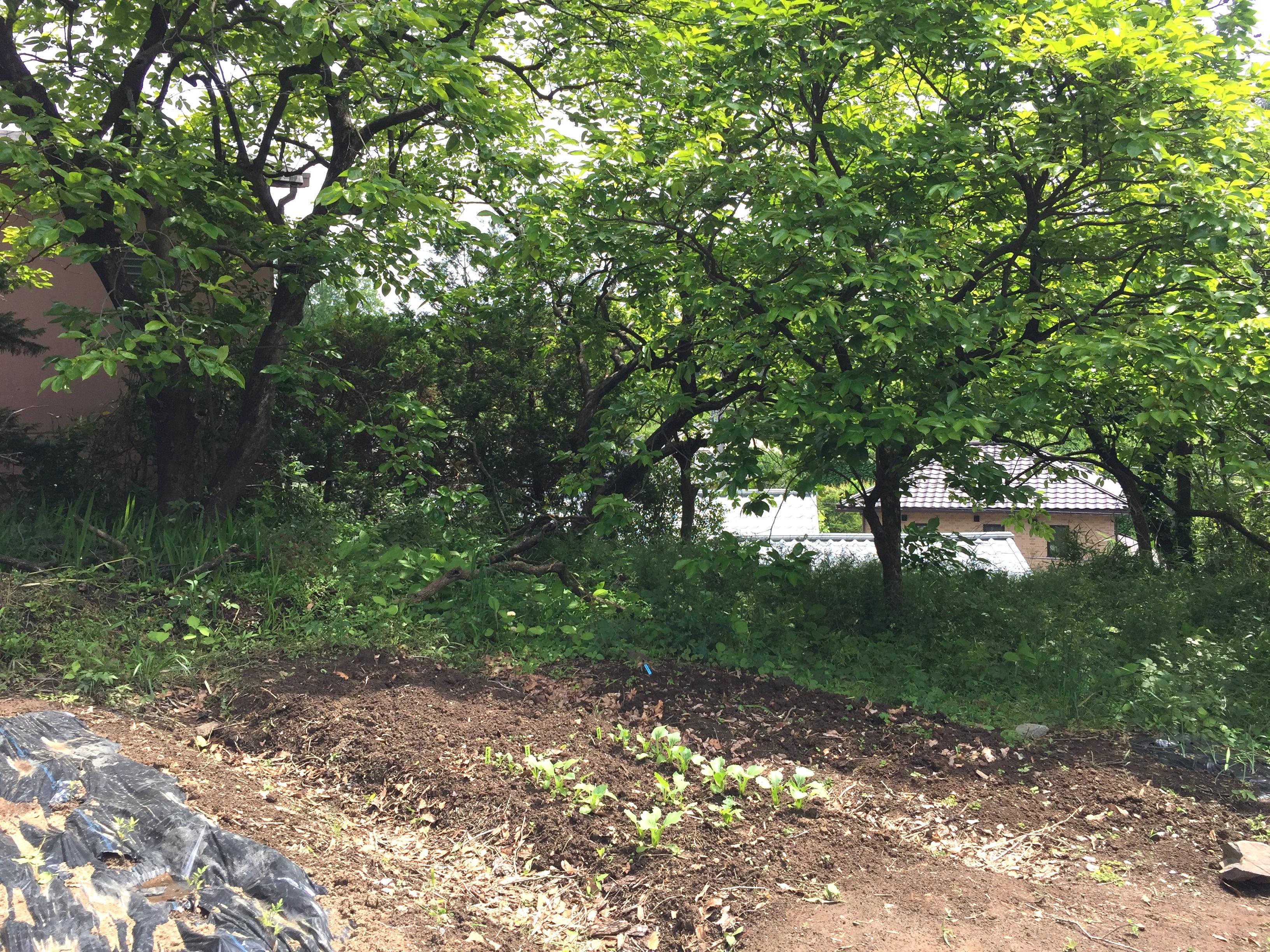就労移行支援事業所 働くしあわせ JINEN-DO近くの樹木