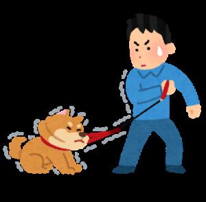 飼い主に反発する小型犬と飼い主